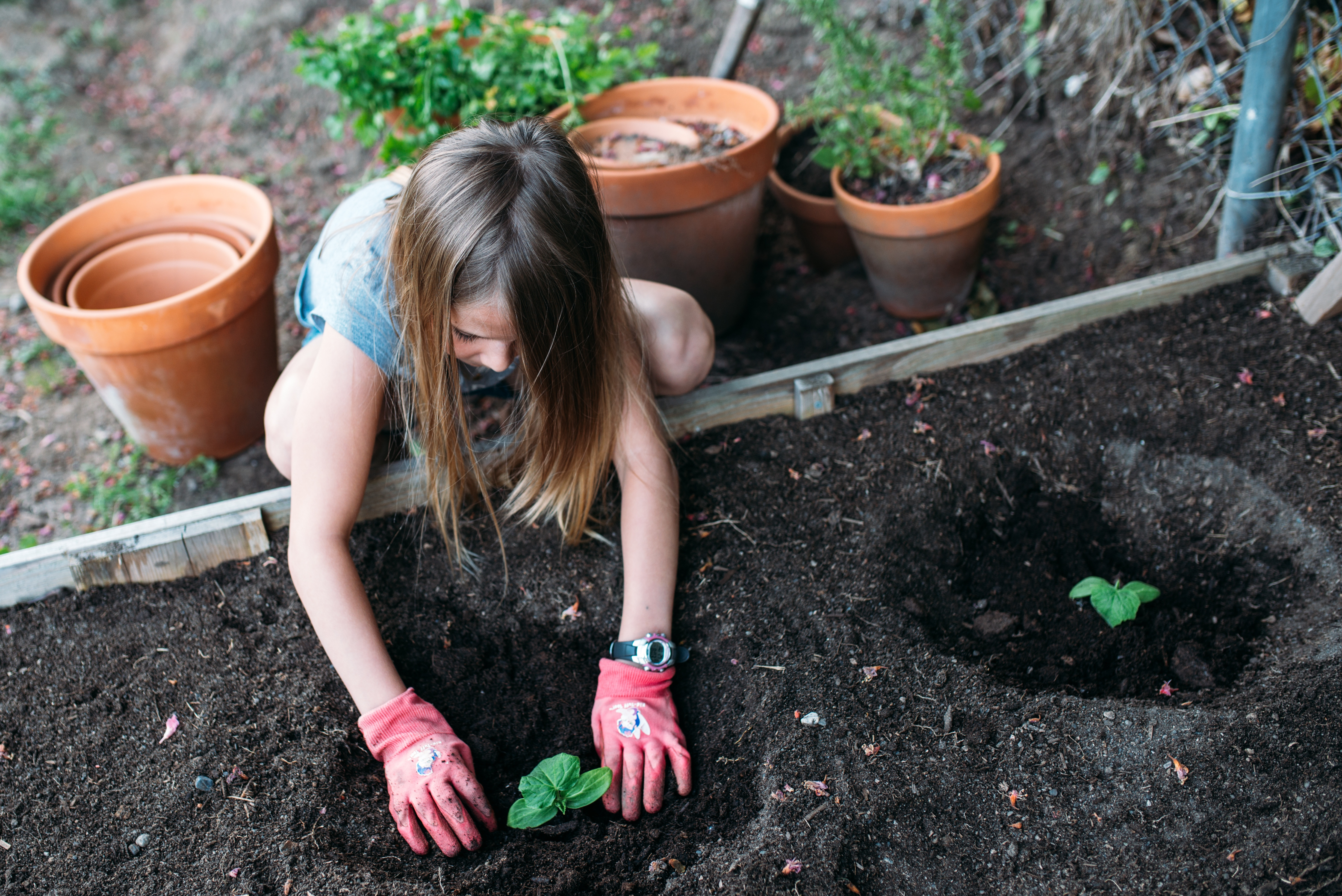 K12 stockphoto young girl planting vegetables